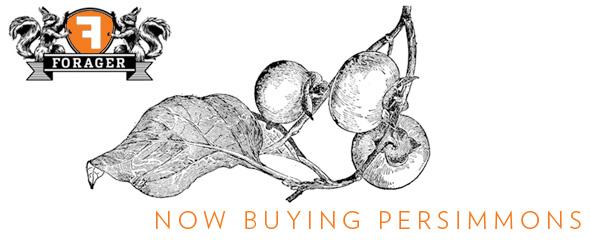 forager-persimmons.jpg#asset:6683:url